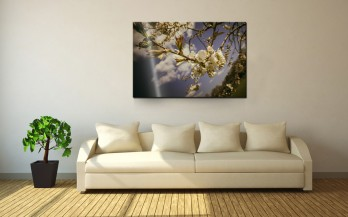 NATURE-Style (FOTOprint)