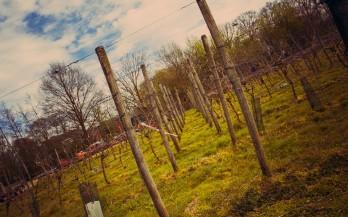 Twentewijn - Besichtigu